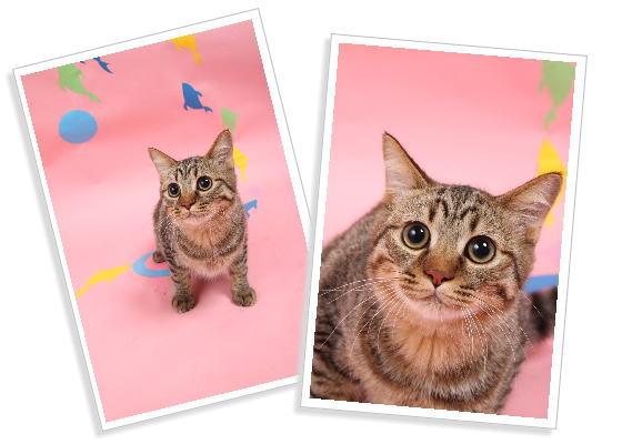 猫の写真で作る