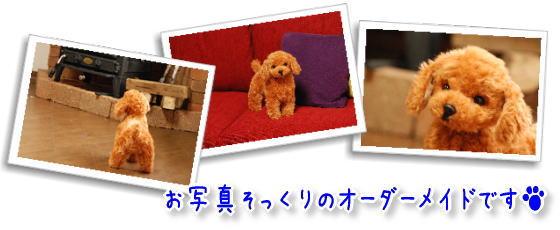 ペットのお写真