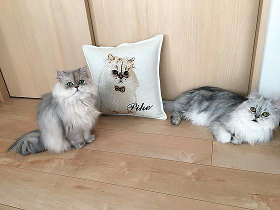 猫の一周忌オリジナルクッション