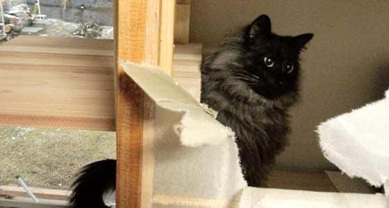 猫と障子貼り