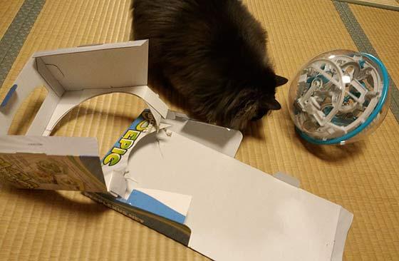 娘のおもちゃで遊ぶ猫