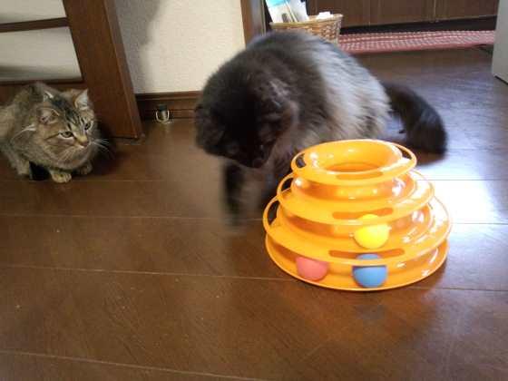 内祝いで遊ぶ猫と遊ばない猫