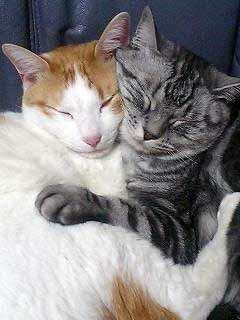 抱き合って寝る猫