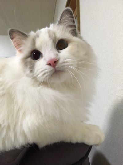元になった猫の写真
