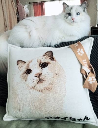 猫の写真で作るオーダーメイドグッズ