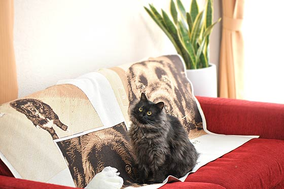 猫と愛犬の作品