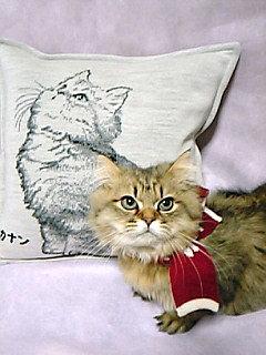 モデルの猫ちゃん