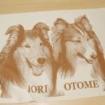 ioriotome