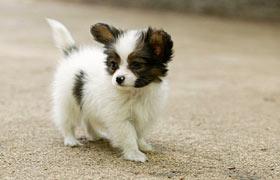 モデルの愛犬