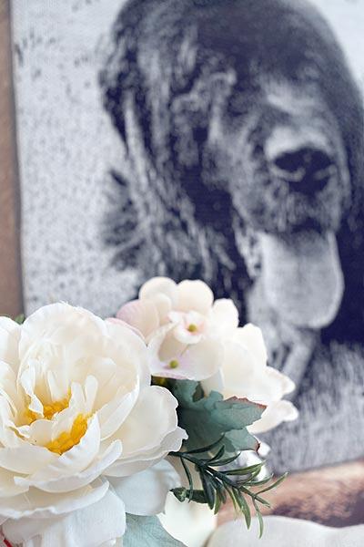 ペットに供える花
