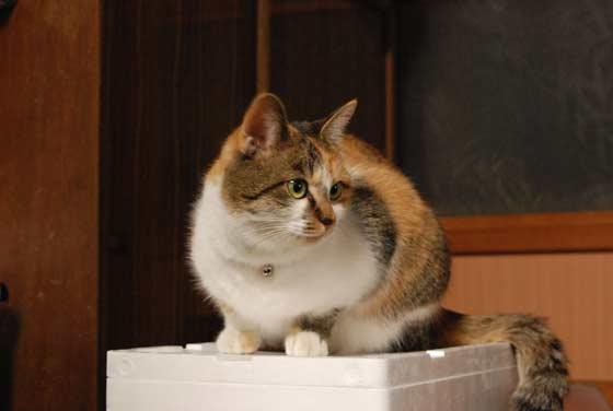 猫のみぃちゃん