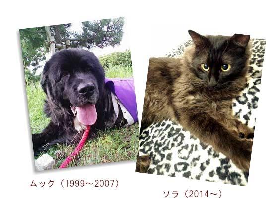 動物保護施設の猫