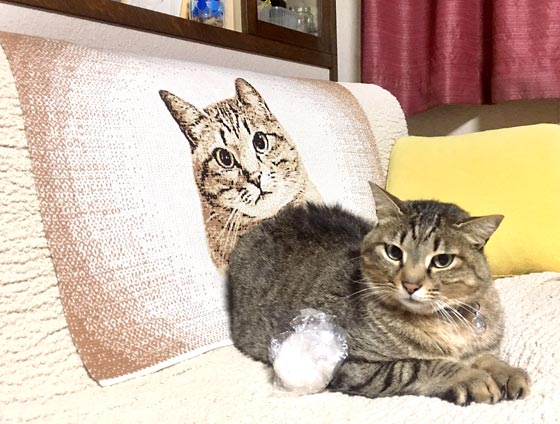 猫のひざ掛け