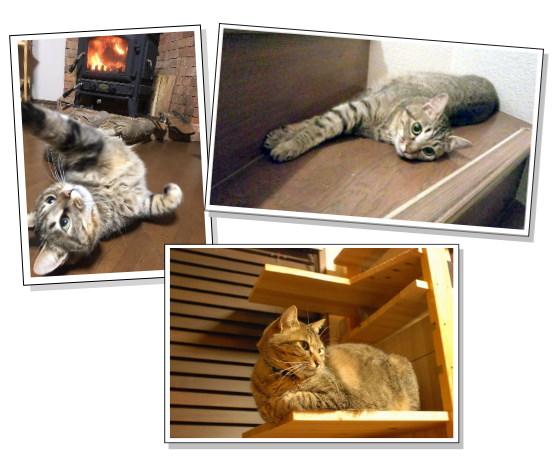 亡くなった猫の思い出の写真
