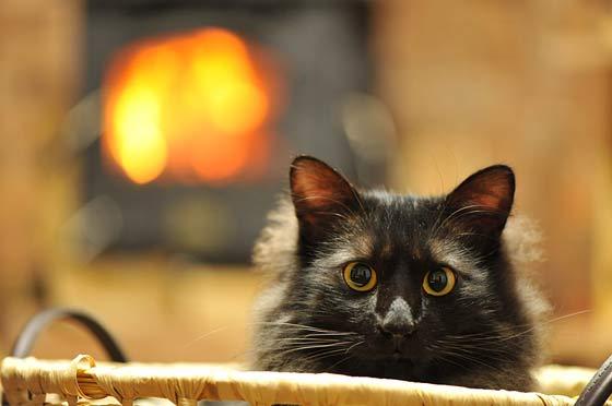 初めてウチに来た日の猫
