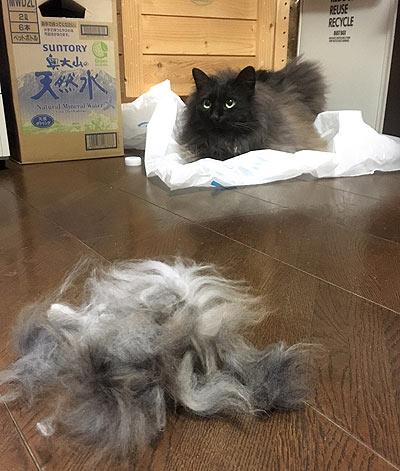 猫の毛フェルト