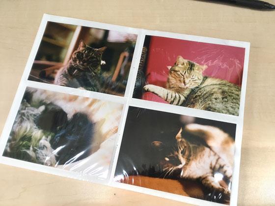 ペットのアルバム写真整理