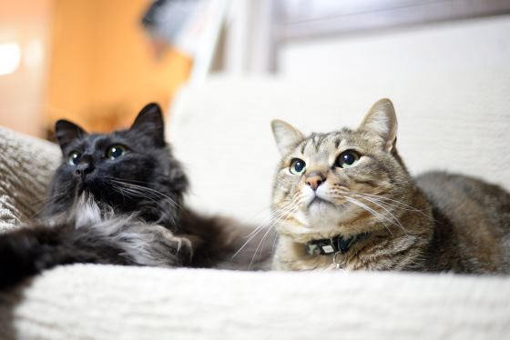 猫のソラとマロ
