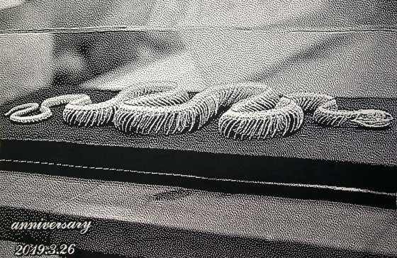 蛇の骨格標本