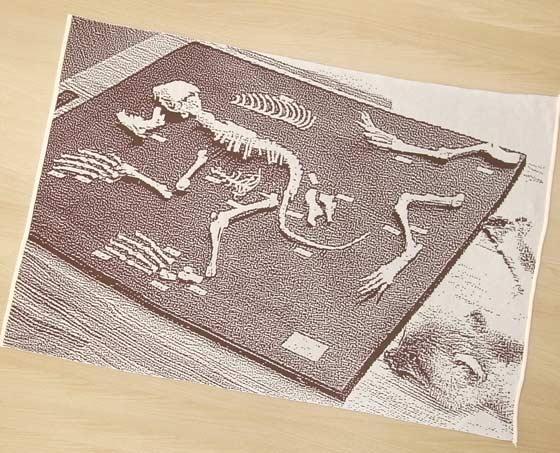 骨の仕組みが分かります