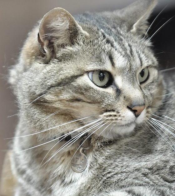 猫のチャーム