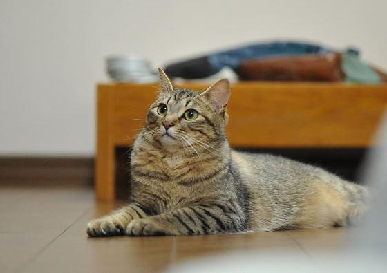 ウチのネコ
