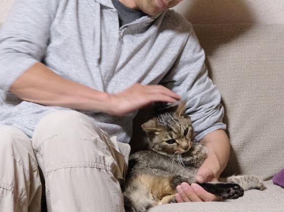 大好きな猫