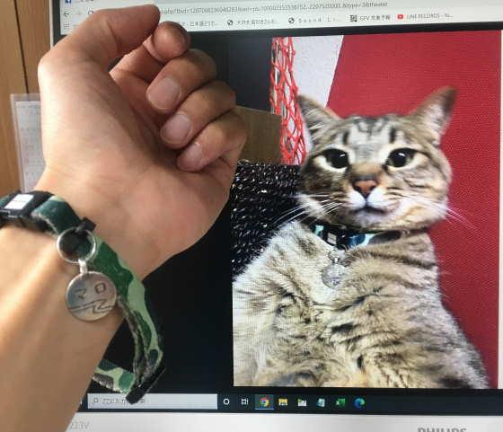 天国の猫からのプレゼント