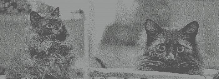 ストールのイメージ図案