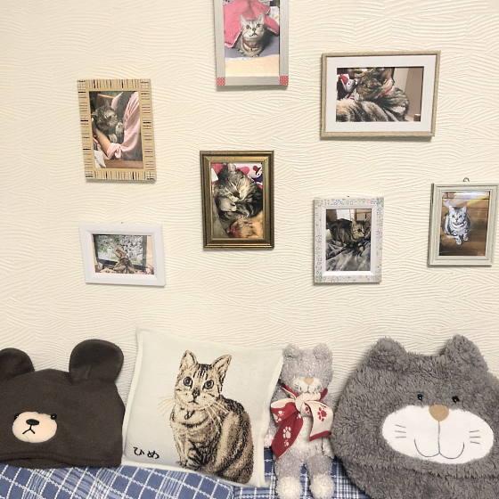 猫の思い出の写真