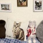 猫のクッション